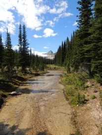 Iceline trail, Yoho National Park
